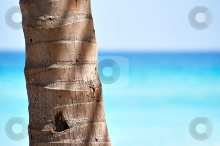 Palm trunk and a beautiful beach stock photo, Palm trunk with copyspace in the right and a beautiful beach by Karel Miragaya