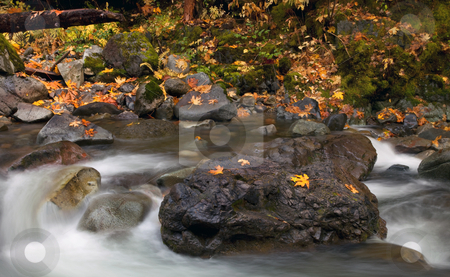 The Center of it All stock photo, A flowing stream surrounds a large boulder covered with autumn leaves as it flows down from the Cascade Mountains by Mike Dawson