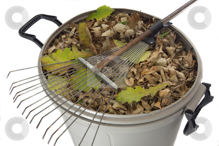 Rake and dry leaves in garbage bin stock photo, Old rusty rake and dry leaves in plastic garbage bin isolated on white - fall backyard work concept by Marek Uliasz