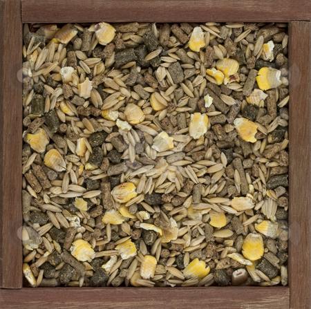 Horse feed with corn, barley, oats grain and suplement  stock photo, Horse feed with corn, barley, oats grain and suplement granulates in  a rustic wooden box by Marek Uliasz
