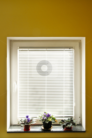 Window blinds stock photo, Horizontal blinds on window with three houseplants by Elena Elisseeva