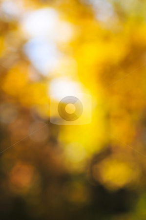 Fall background stock photo, Green natural background of out of focus autumn forest or bokeh by Elena Elisseeva