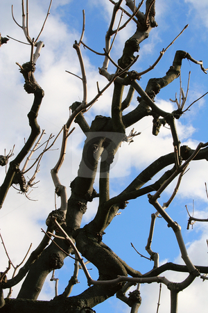 Black branch stock photo, The black branch and blue sky in Wien by Mirumur