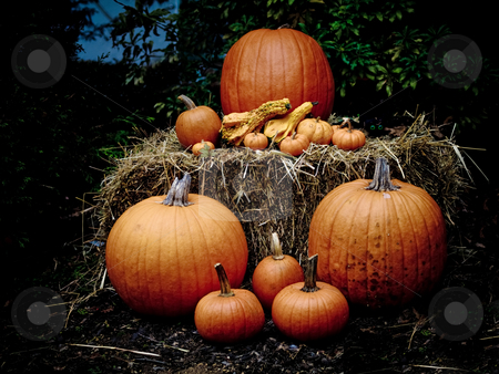Pumpkins on a hayable at dusk stock photo, Pumpkins on a hayable at dusk by Jim DeLillo
