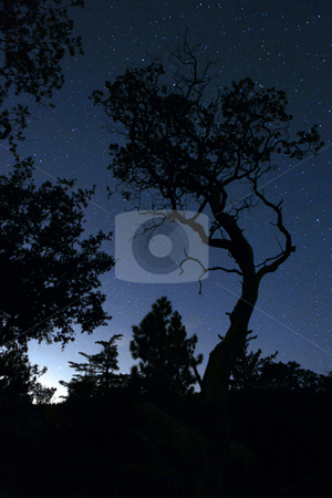Life Like Tree Silhouette in the Darkness stock photo, Life Like Tree Silhouette in the Darkness With Only Star Lights. Slight Noise Due to Unavoidable Long Exposure. by Katrina Brown