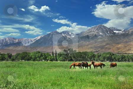Horses Living in the Eastern Sierra  Mountains stock photo, Horses Living in the Eastern Sierra Nevada Mountains by Katrina Brown