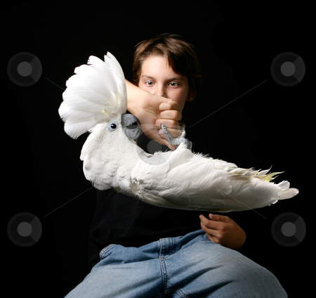 Child Holding Playful Umbrella Cockatoo Upside Down stock photo, Child Holding Playful Umbrella Cockatoo by Katrina Brown