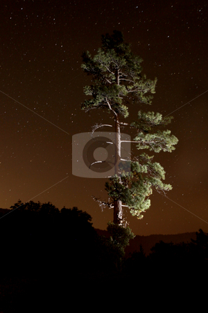 Lightpainted Tree in the Forest at Night stock photo, Lightpainted Tree in the Forest at Night With Star Trails in the Sky. Stars are Intentionally Blurred for Trail Effect by Katrina Brown