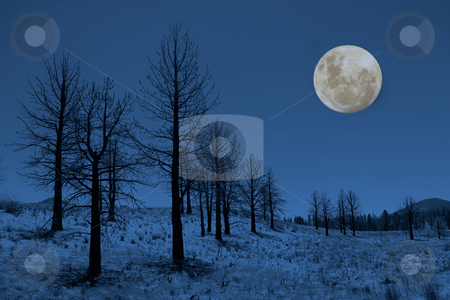 Moon and Trees in the Sierras stock photo, Moon and Trees in the Sierra Mountains by Katrina Brown