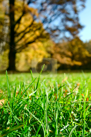 Green grass over autumnal forest  stock photo, Green grass over autumnal forest. Vertical image by Sergey Plakhotin