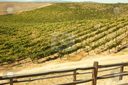 Beautiful Wine Vineyard stock photo, Beautiful Wine Vineyard in California, United States. by Andy Dean