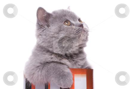 Little kitty stock photo, Little kitty in the box on a white background by Artem Zamula