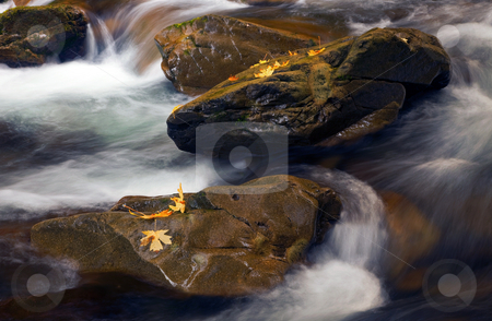 Over and Around stock photo, Russhing water flows over and around large boulders covered in autumn leaves by Mike Dawson