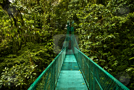 Hanging bridge stock photo, A hanging bridge in the jugles of Costa rica by bah1969