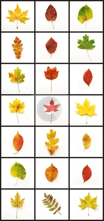Autumn Leafs stock photo, Autumn leafs colourful autumn leafs good for background by Tudor Antonel adrian