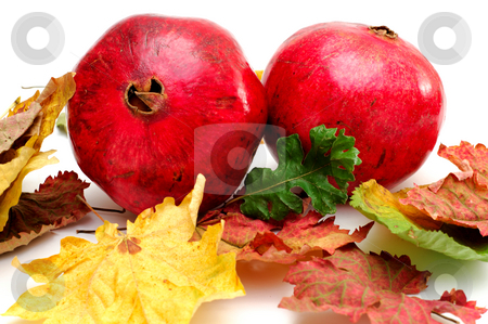 Autumn Pomegranates stock photo, Bright red Pomegranates with colorful fall leaves isolated on a white background by Lynn Bendickson