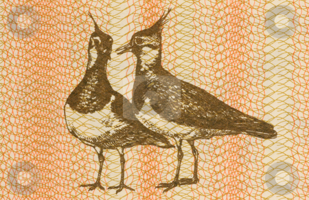Pair of Eurasian Lapwings stock photo, Pair of eurasian lapwings on 1 talonas banknote from Lithuania by Georgios Kollidas