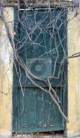 Antique door sealed by roots stock photo, Antique door sealed by roots in Athens, Greece by Georgios Kollidas