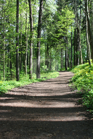 Forest Trail stock photo, Path winds through a lush green forest by Olga Lipatova