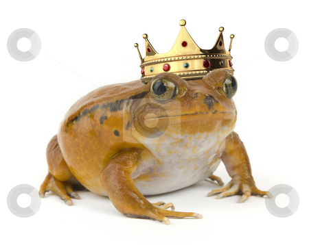 Orange Frog stock photo, Orange tropical frog wearing a crown on a white background by James Steidl