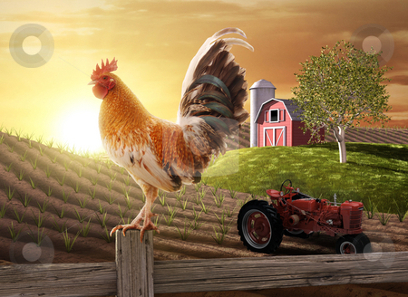 Country Farm Morning stock photo, Rooster perched upon a farm fence post as the sun rises behind him by James Steidl