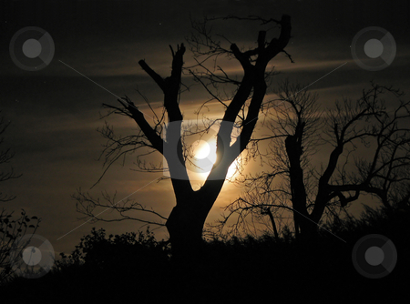 Moon and Tree Silhouette stock photo, Moon and Tree Silhouette by Susan Robinson
