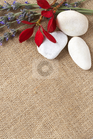 Beautiful red flowers and lavender stock photo, Beautiful red flowers and lavender with white pebbles on mesh material background with copy space by Elena Weber (nee Talberg)