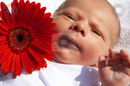 Small newborn baby with a flower stock photo, Small newborn baby lying on his back with a daisy flower by Elena Weber (nee Talberg)