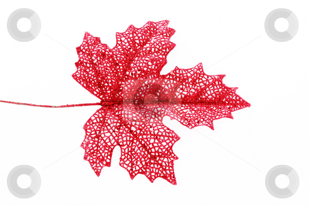 Leaf stock photo, Red leaf over white background. Isolated object by Giuseppe Ramos