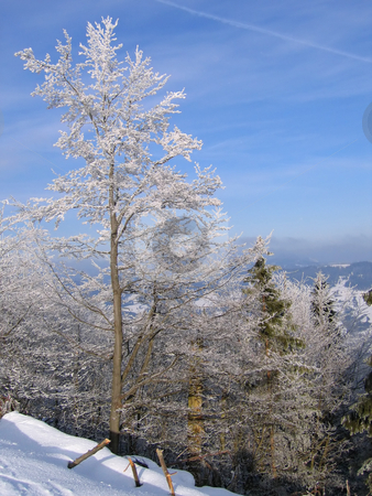Trees covered by snow stock photo, Winter landscape - snow covered forest on the hillside by Olga Lipatova