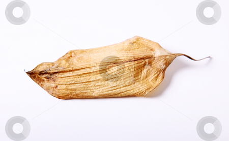 Leaf dry stock photo, A dry leaf on a white background by Giuseppe Ramos