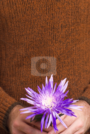 Flower With Copyspace stock photo, Closeup view of a man holding a flower with copyspace above by Richard Nelson