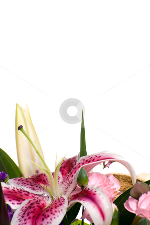 Lily Copyspace stock photo, A bouquet with a lily with white copyspace above by Richard Nelson