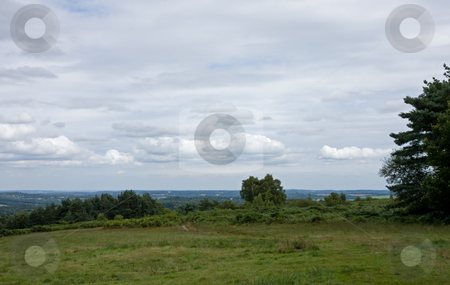 Ashdown Forest View stock photo, Ashdown Forest View across heathland by Susan Robinson