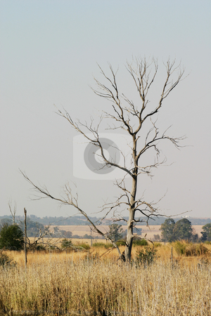 Dead tree stock photo, Dead tree in nature reserve by Sean Nel