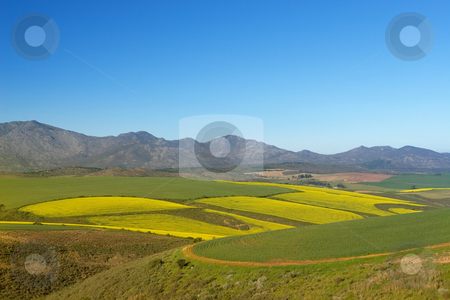Farm #6 stock photo, Field of Flowers - Western Cape, South Africa by Sean Nel