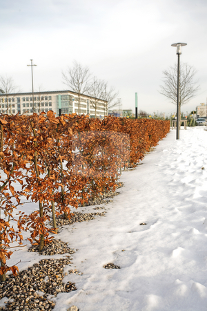 Munich #19 stock photo, Trees in Munich - Riem surrounded by snow. by Sean Nel
