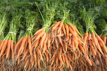 Fresh carrots with green stalks and roots. stock photo, Fresh carrots with green stalks and roots. by Stephen Rees