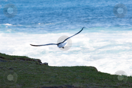 Bird #3 stock photo, Seagull flying away with the ocean in the background by Sean Nel