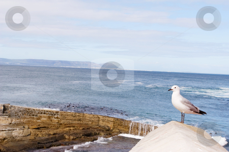 Bird #8 stock photo, Seagull sitting on roof - copy space by Sean Nel