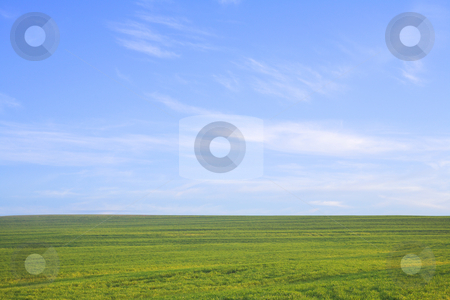Green field against blue sky stock photo, Nature background. Green grass field against a blue sky with wispy white clouds by Sean Nel
