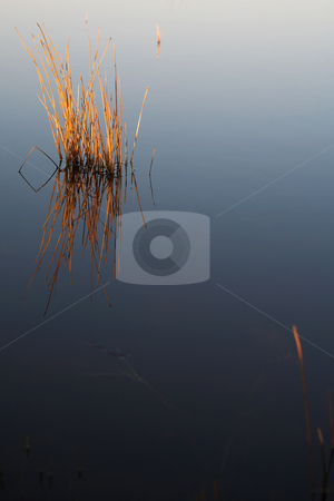 Flyfish #36 stock photo, Plant in a fly fishing dam. by Sean Nel