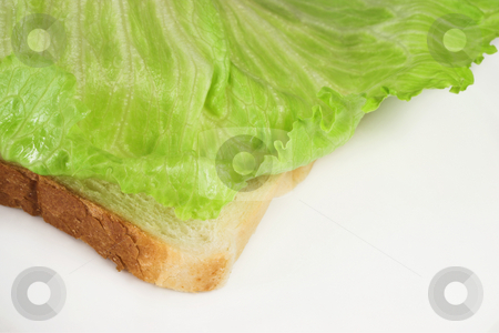 Food #42 stock photo, Lettuce on a slice of white bread by Sean Nel