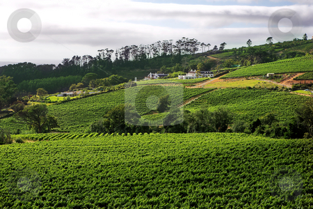 Wine farm on the Western Cape wine route  stock photo, A beautiful wine farm against the hills of the Western Cape in South Africa. A cloudy day with spots of sunlight on the farmhouse and other buildings. by Sean Nel