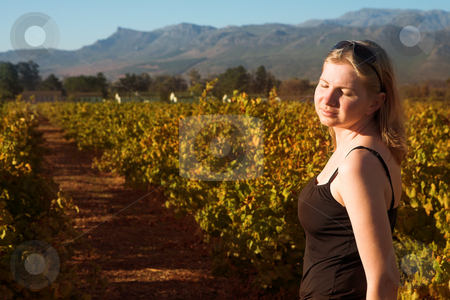 Blonde woman in the vineyards at sunset stock photo, Beautiful blonde woman standing with closed eyes in the setting sun in an autumn vineyard at Boschendal, Western Cape, South Africa. Shallow Depth of Field. Focus on single woman by Sean Nel