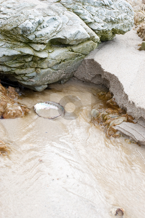 Seasandbackground #3 stock photo, Rocks and shells ont beach - copy space by Sean Nel