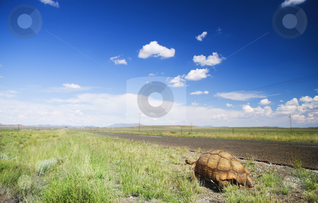Tortoise on a trip stock photo, African tortoise walking next to a road in the Karoo, South Africa by Sean Nel