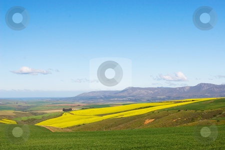 Farm #7 stock photo, Field of Flowers - Western Cape, South Africa by Sean Nel