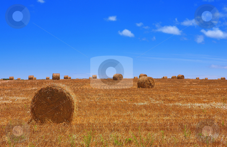 Haybales #2 stock photo, Rolls of gathered hay on the lands by Sean Nel