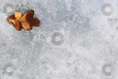 Regensburg #053 stock photo, A brown leaf, on ice. by Sean Nel